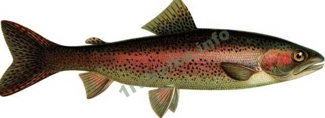 озеро куйто рыбалка