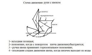 Схема-движения-руки-с-квоком для ловли сома