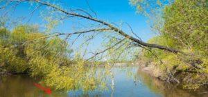 поплавочная рыбалка летом на реке