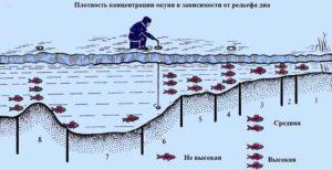 Выбор места для зимней ловли окуня на мормышку