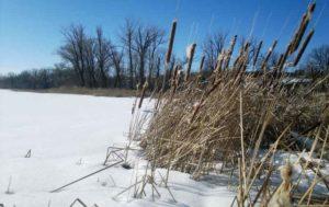 Перпективные места зимняя ловля окуня на мормышку