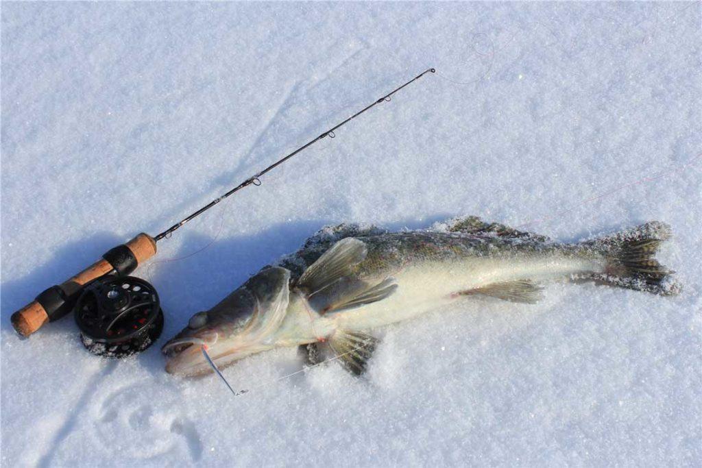 как ловить судака зимой на блесну