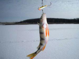 ловля окуня на балансир зимой