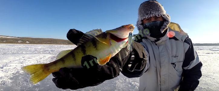 Ловля окуня зимой на блесну. Топ 5 блесен на окуня   Видео