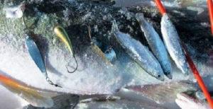 Ловля судака на тюльку зимой