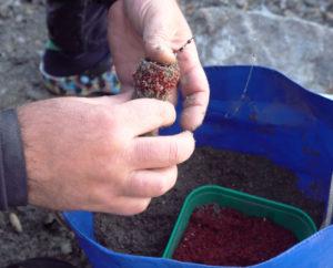 Ловля плотвы на фидер весной