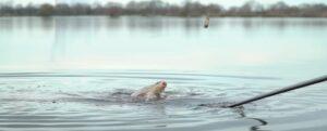ловля леща весной на реке на фидер